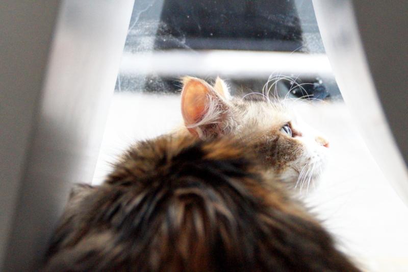 Meow Parlour New York