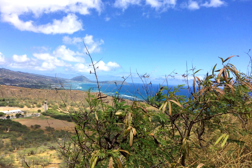Oahu Hike Diamond Head