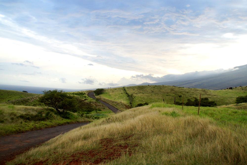 Wildes Maui