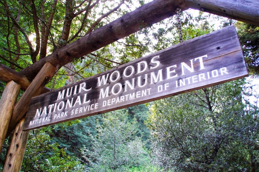 Muir Woods nahe San Francisco: Anreise, Tipps & Kosten