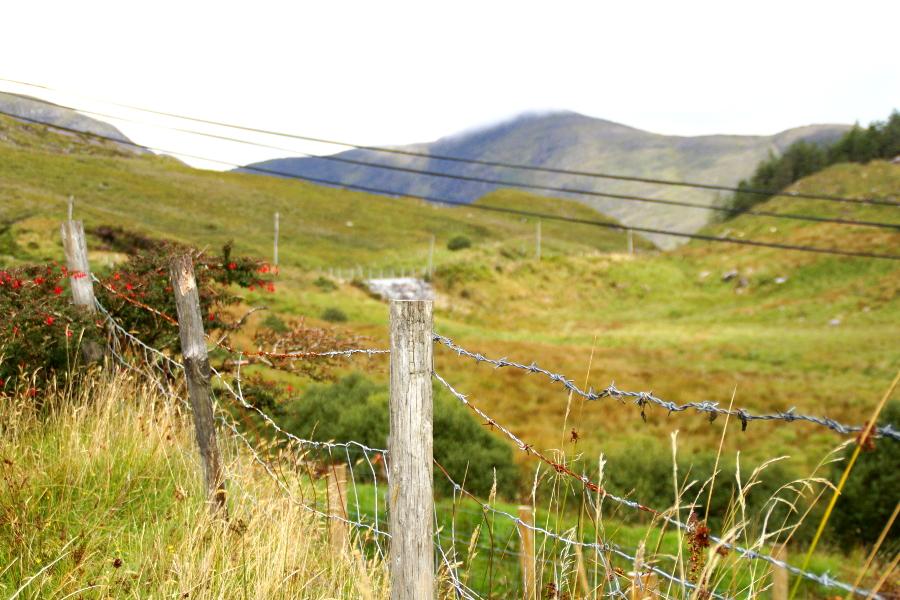 7 Tage Irland Rundreise: Was du sehen kannst