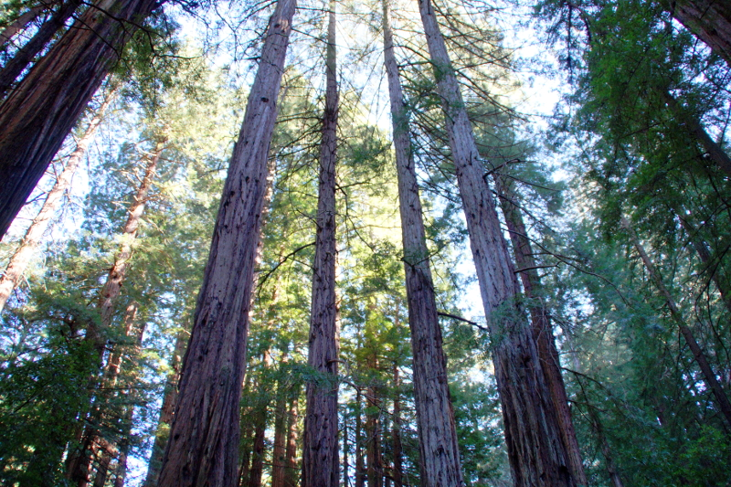 schönsten Nationalparks an der US-Westküste Muir Woods San Francisco